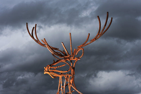 Head Profile photo of the Watchful Stag in front of the evening sky