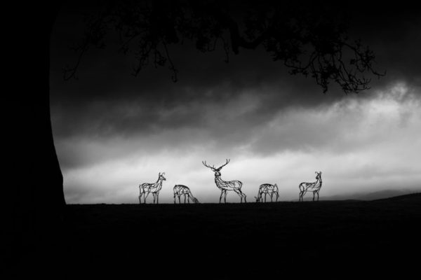 Red Deer Herd Wildlife Sculpture in the early morning mist