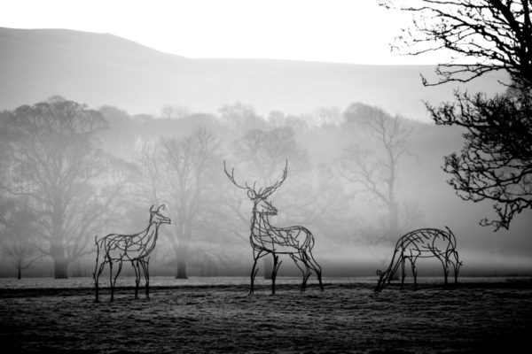 Red Deer Metal Wildlife Sculptures standing in the dawn mist