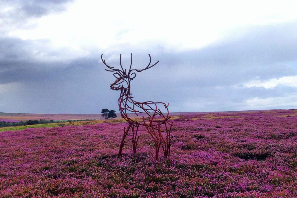 Watchful Stag standing amongst the heather on the Yorkshire Moors by Andrew Kay Sculpture