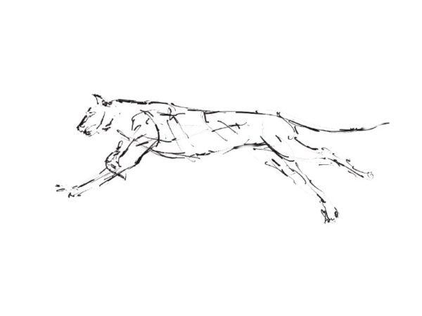 The Creative Process – Wildlife Sculpture Sketch of a Cheetah by Andrew Kay