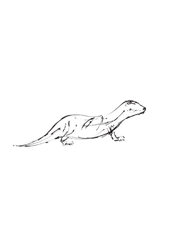 The Creative Process – Wildlife Sculpture Sketch of an Otter by Andrew Kay