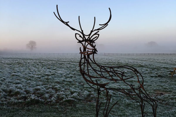 Watchful Stag in his new home in Somerset