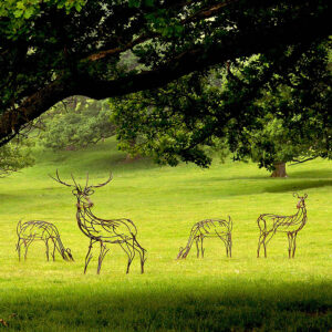 A herd of Red deer stand in a glade. The stag surveys the land; two does graze by his side with two hinds standing proud.