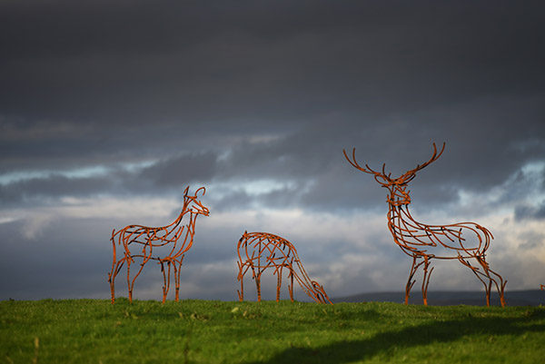 Red Deer trio standing in the fields by Andrew Kay Sculpture