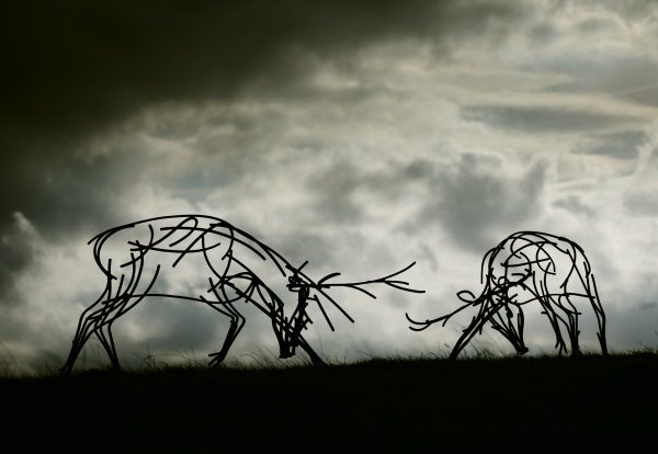 Wildlife Sculpture of two stags rutting against the darkening sky