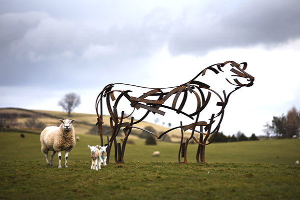 Angus Bull Sculpture standing in the field with sheep and lambs