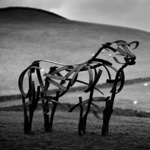 Angus Bull Wildlife Sculpture standing proud with the backdrop of the Yorkshire Hills